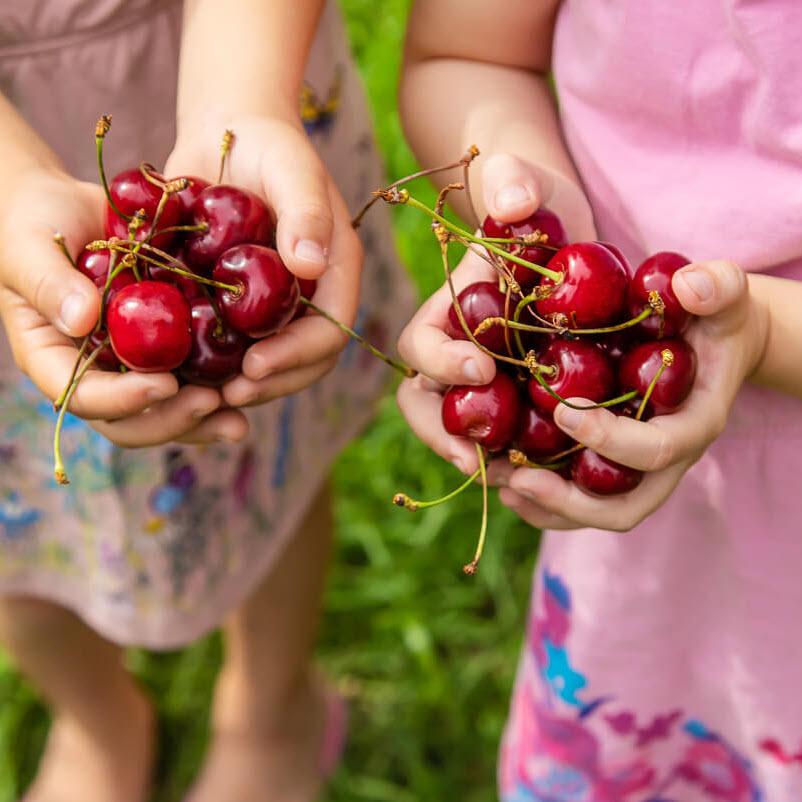 ăn cherry có tốt cho bà bầu